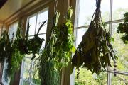 <h5>Drying herbs</h5><p></p>