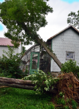 <h5>Trees wreck our greenhouse</h5><p>																																																																																																																																								</p>