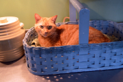 <h5>Sophie loves a basket</h5><p></p>