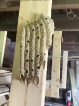 <h5>Pan pipes of Mud Dauber's nest</h5><p></p>