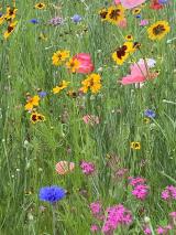 <p>Wild flower garden</p>